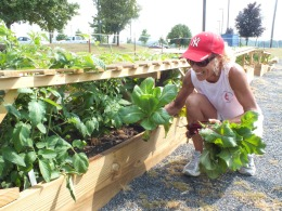 Gardens to Degrees program began in Spring 2012 at Northeast State.